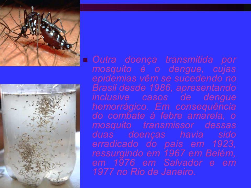 Outra doença transmitida por mosquito é o dengue, cujas epidemias vêm se sucedendo no Brasil desde 1986, apresentando inclusive casos de dengue hemorrágico.