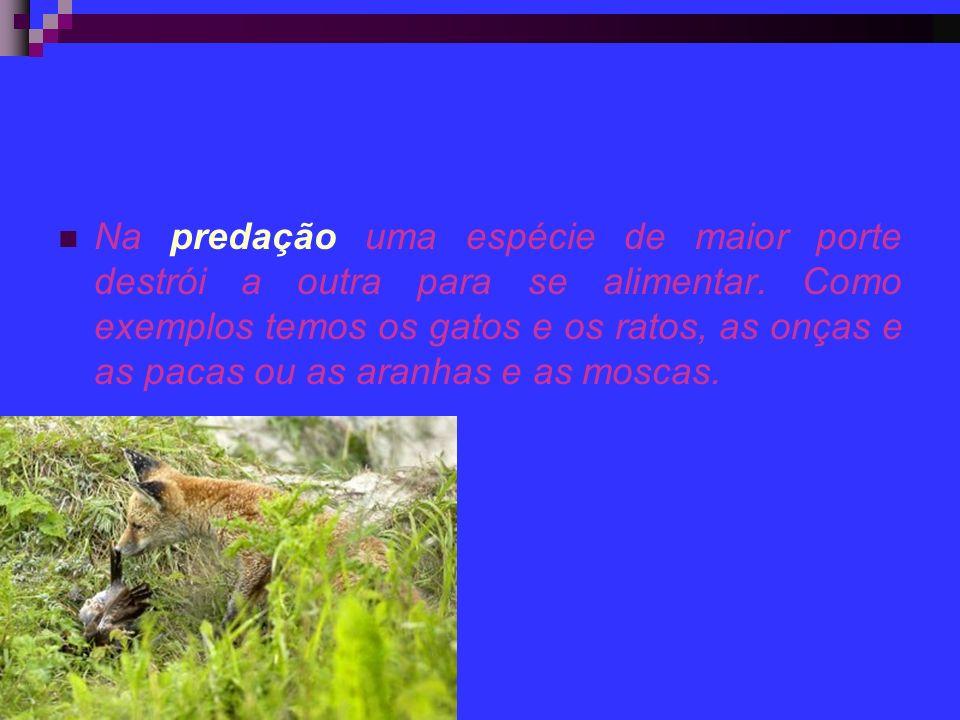 Na predação uma espécie de maior porte destrói a outra para se alimentar.