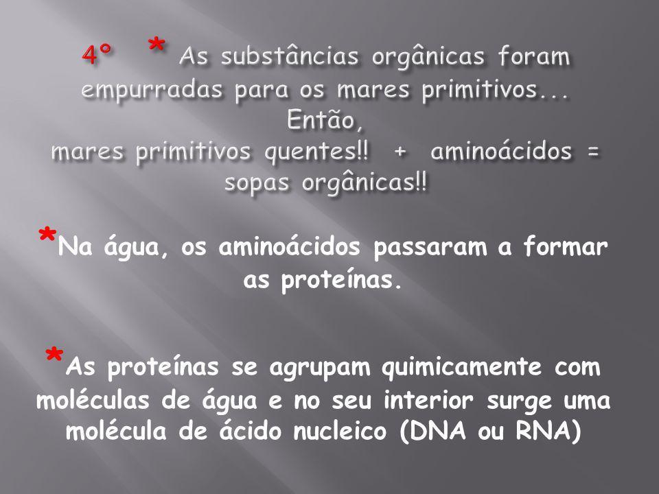 *Na água, os aminoácidos passaram a formar as proteínas.