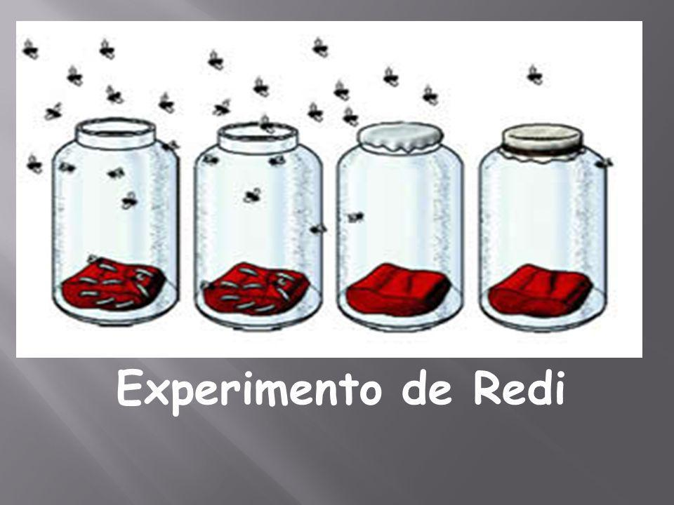 Experimento de Redi