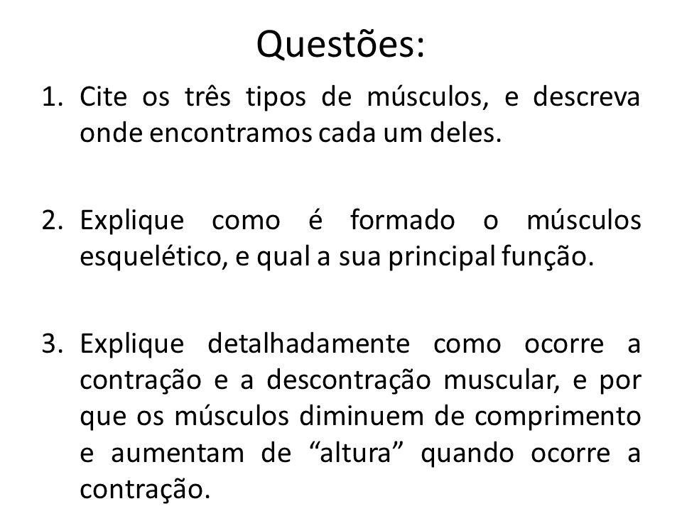 Questões: Cite os três tipos de músculos, e descreva onde encontramos cada um deles.