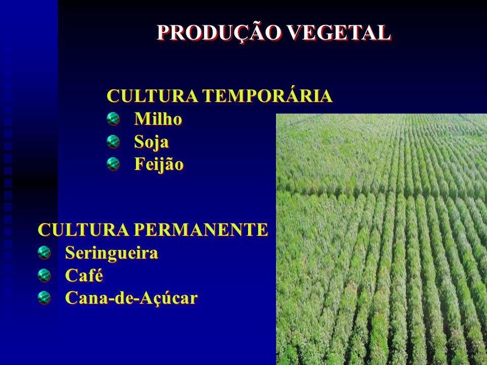 PRODUÇÃO VEGETAL CULTURA TEMPORÁRIA Milho Soja Feijão
