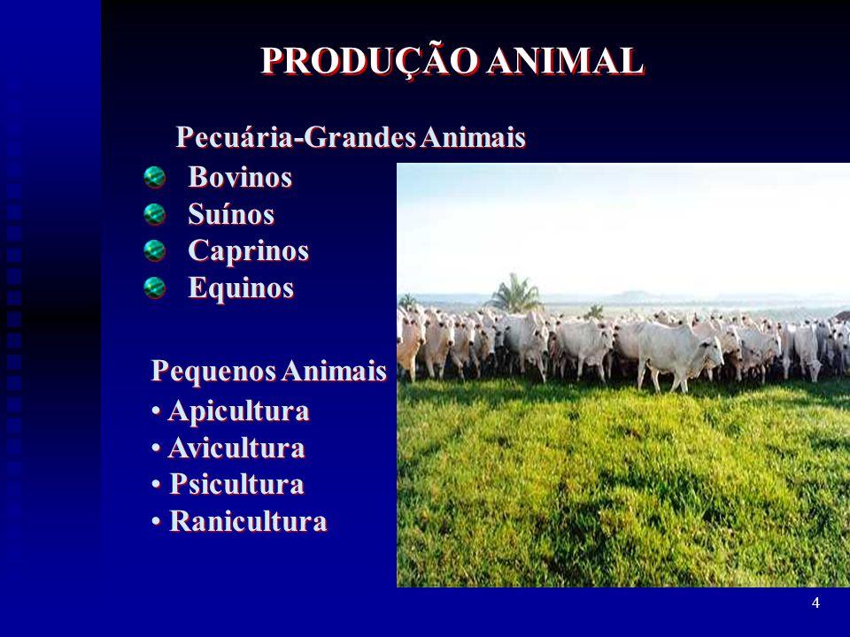 Pecuária-Grandes Animais