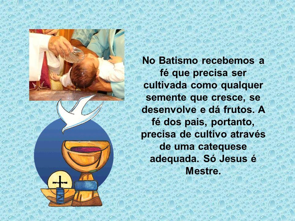 No Batismo recebemos a fé que precisa ser cultivada como qualquer semente que cresce, se desenvolve e dá frutos.