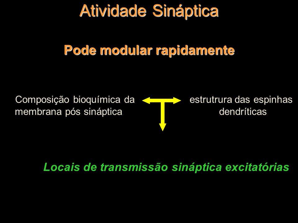 Atividade Sináptica Pode modular rapidamente