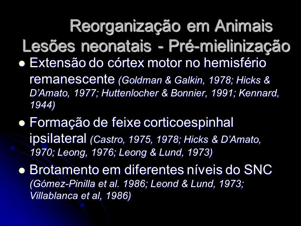 Reorganização em Animais Lesões neonatais - Pré-mielinização