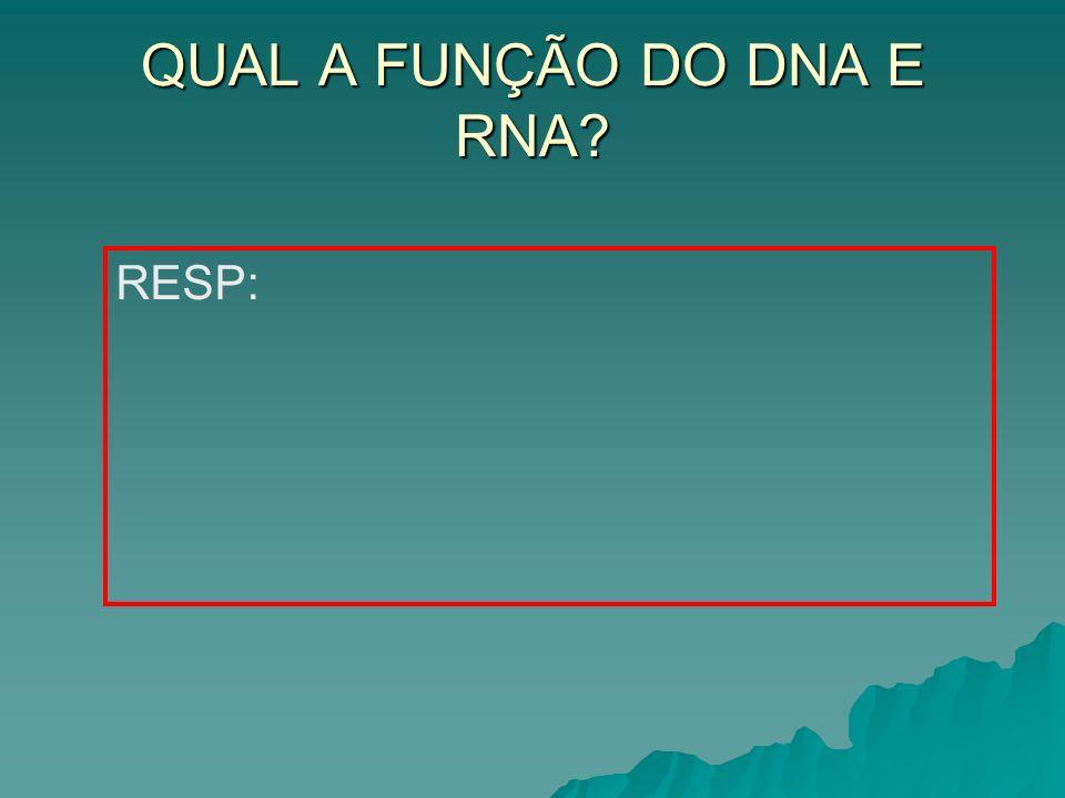 QUAL A FUNÇÃO DO DNA E RNA