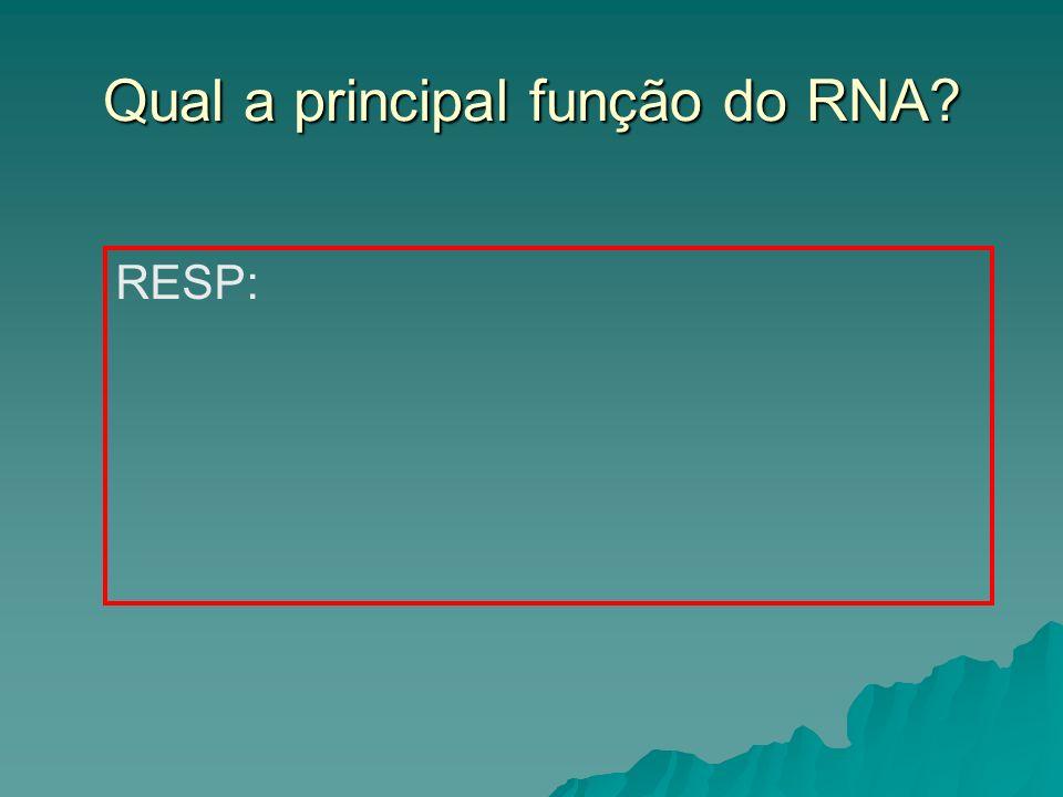 Qual a principal função do RNA
