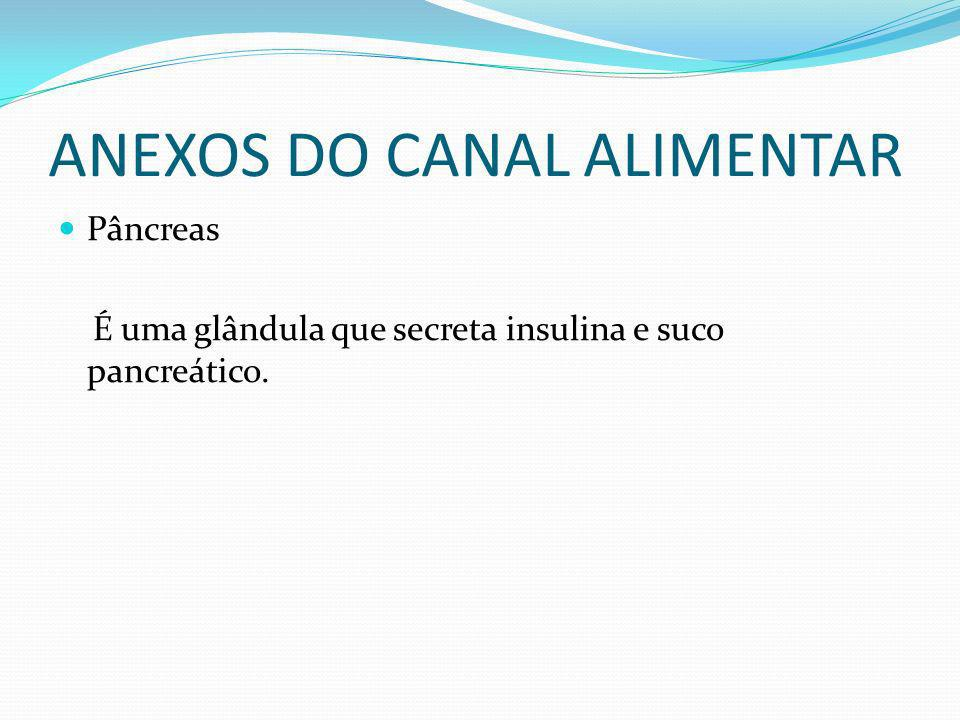 ANEXOS DO CANAL ALIMENTAR