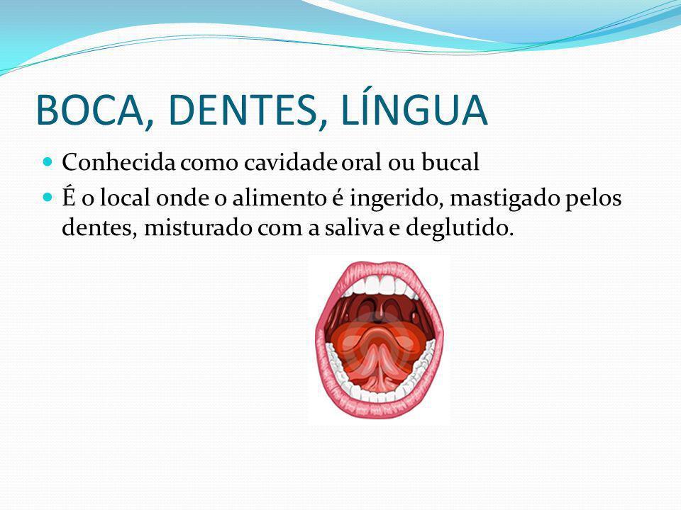 BOCA, DENTES, LÍNGUA Conhecida como cavidade oral ou bucal