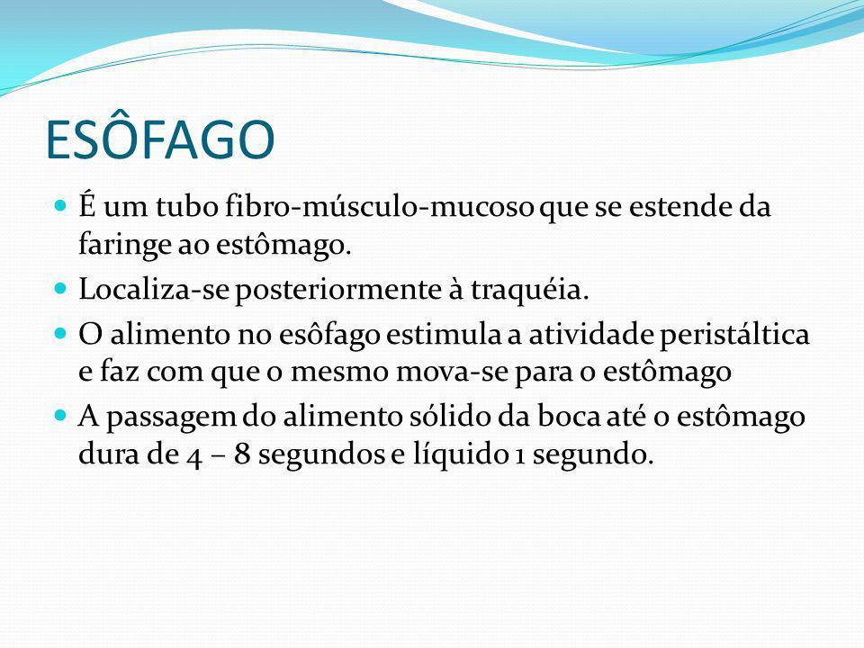 ESÔFAGO É um tubo fibro-músculo-mucoso que se estende da faringe ao estômago. Localiza-se posteriormente à traquéia.