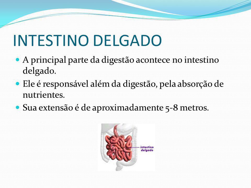INTESTINO DELGADO A principal parte da digestão acontece no intestino delgado. Ele é responsável além da digestão, pela absorção de nutrientes.