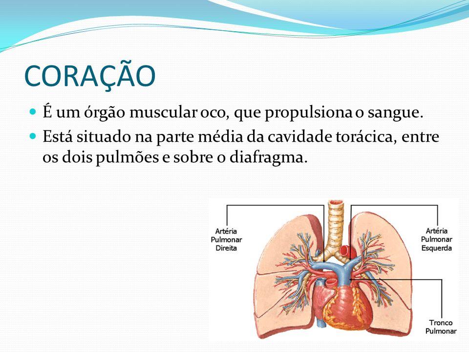 CORAÇÃO É um órgão muscular oco, que propulsiona o sangue.