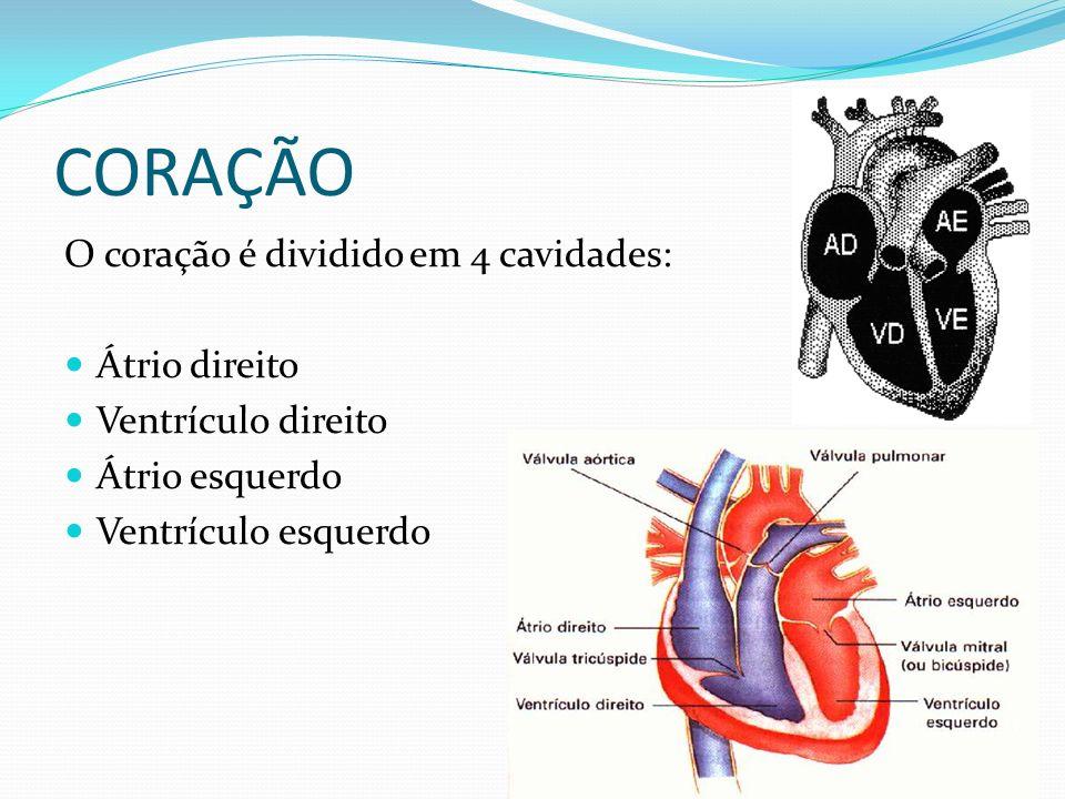 CORAÇÃO O coração é dividido em 4 cavidades: Átrio direito