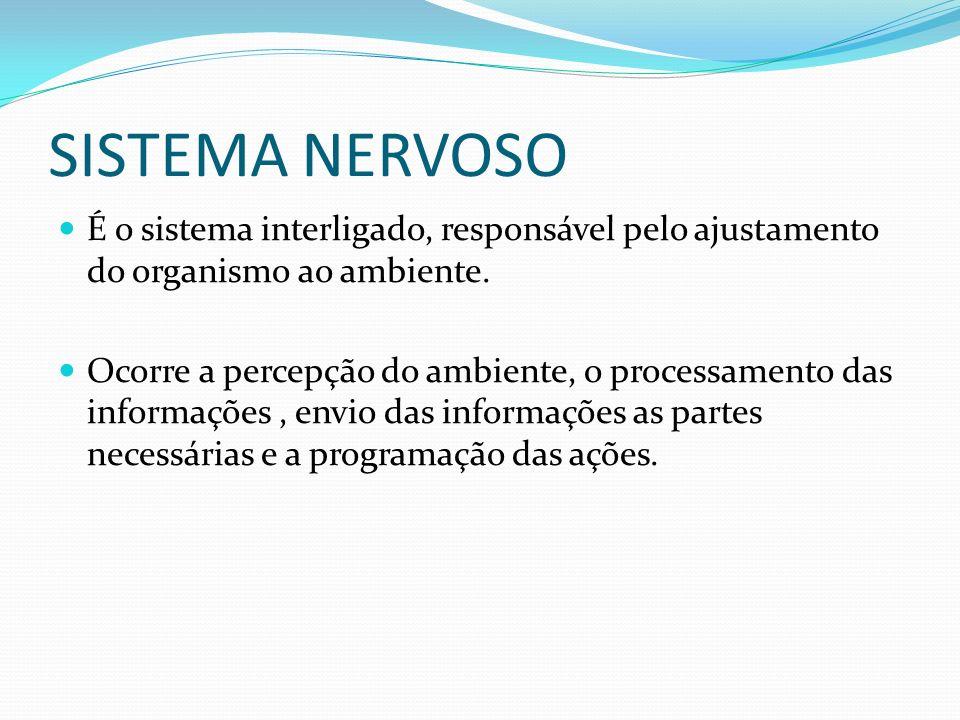 SISTEMA NERVOSO É o sistema interligado, responsável pelo ajustamento do organismo ao ambiente.
