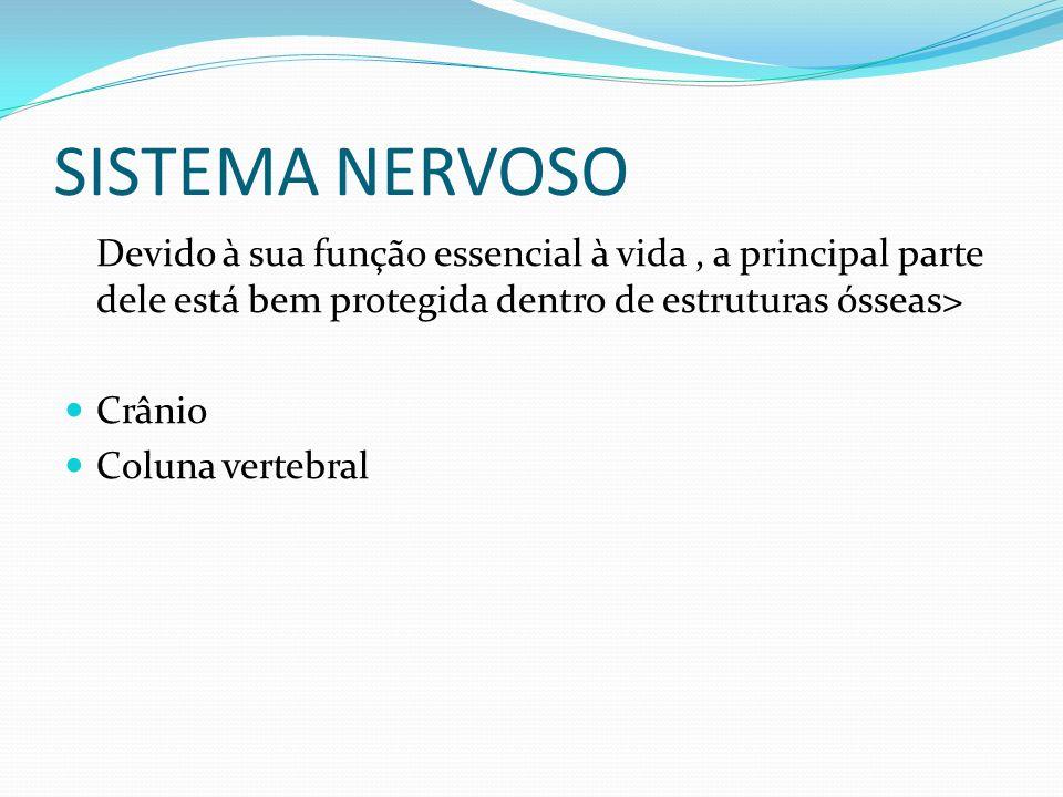 SISTEMA NERVOSO Devido à sua função essencial à vida , a principal parte dele está bem protegida dentro de estruturas ósseas>