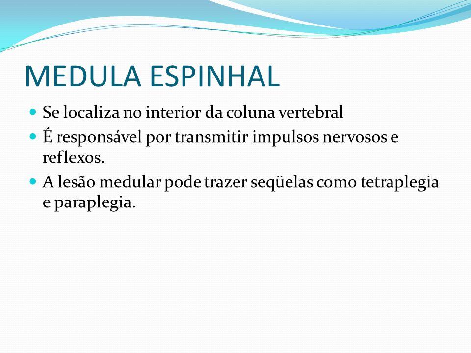 MEDULA ESPINHAL Se localiza no interior da coluna vertebral