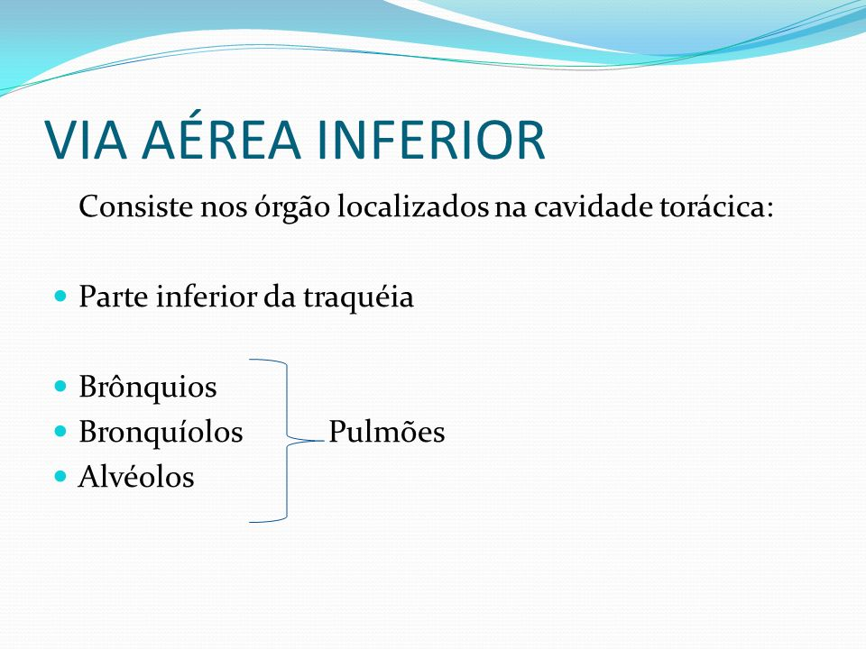 VIA AÉREA INFERIORConsiste nos órgão localizados na cavidade torácica: Parte inferior da traquéia. Brônquios.