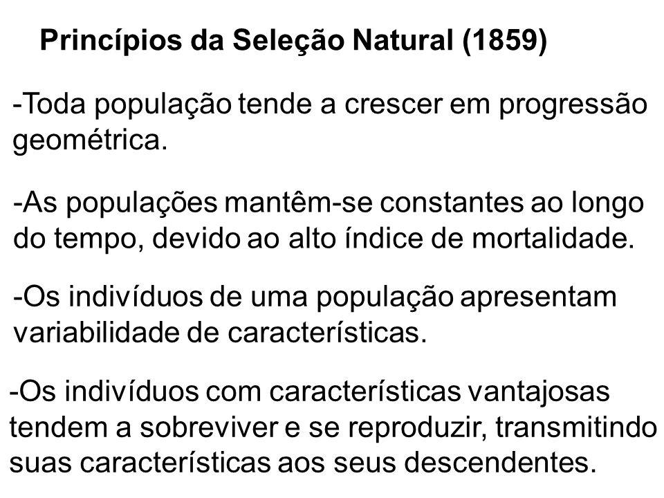 Princípios da Seleção Natural (1859)