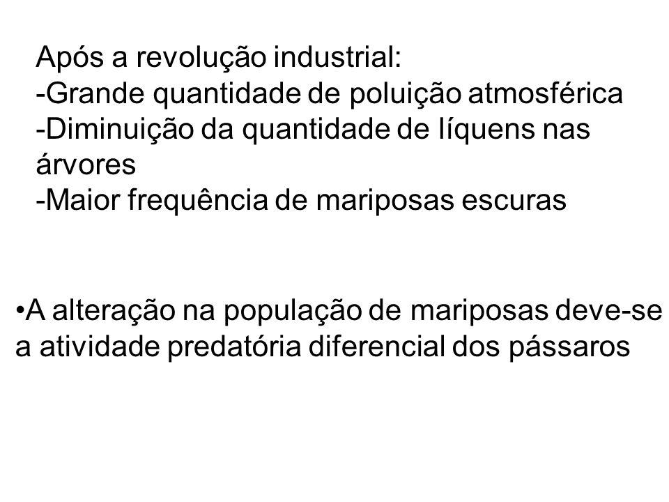 Após a revolução industrial: