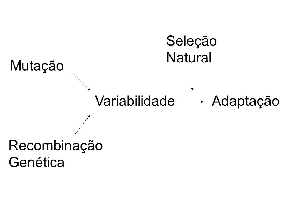 Seleção Natural Mutação Variabilidade Adaptação Recombinação Genética
