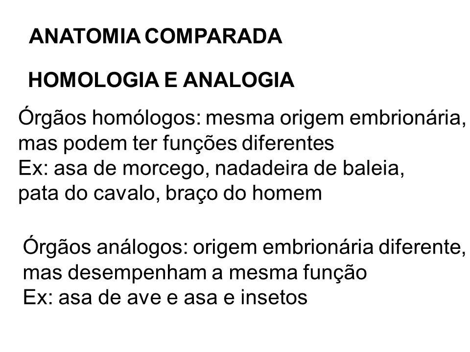 ANATOMIA COMPARADA HOMOLOGIA E ANALOGIA. Órgãos homólogos: mesma origem embrionária, mas podem ter funções diferentes.