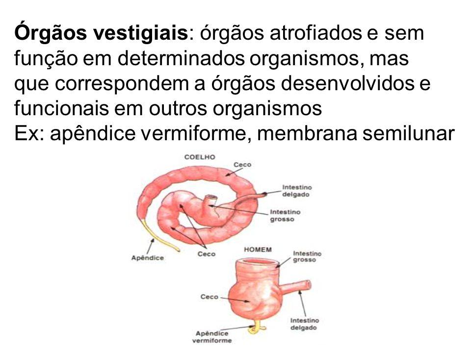 Órgãos vestigiais: órgãos atrofiados e sem