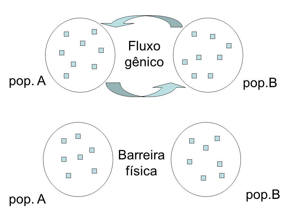 Fluxo gênico pop. A pop.B Barreira física pop.B pop. A