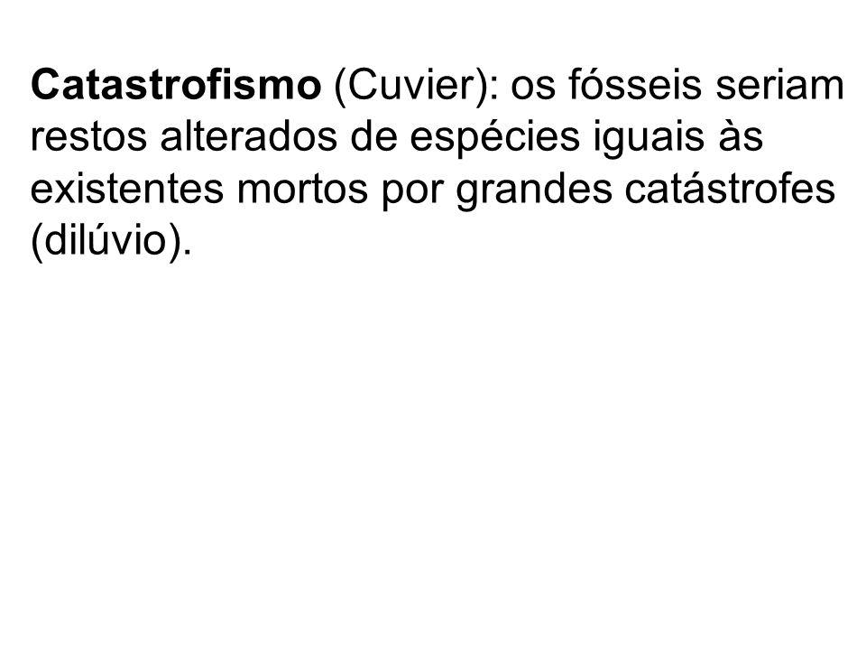 Catastrofismo (Cuvier): os fósseis seriam