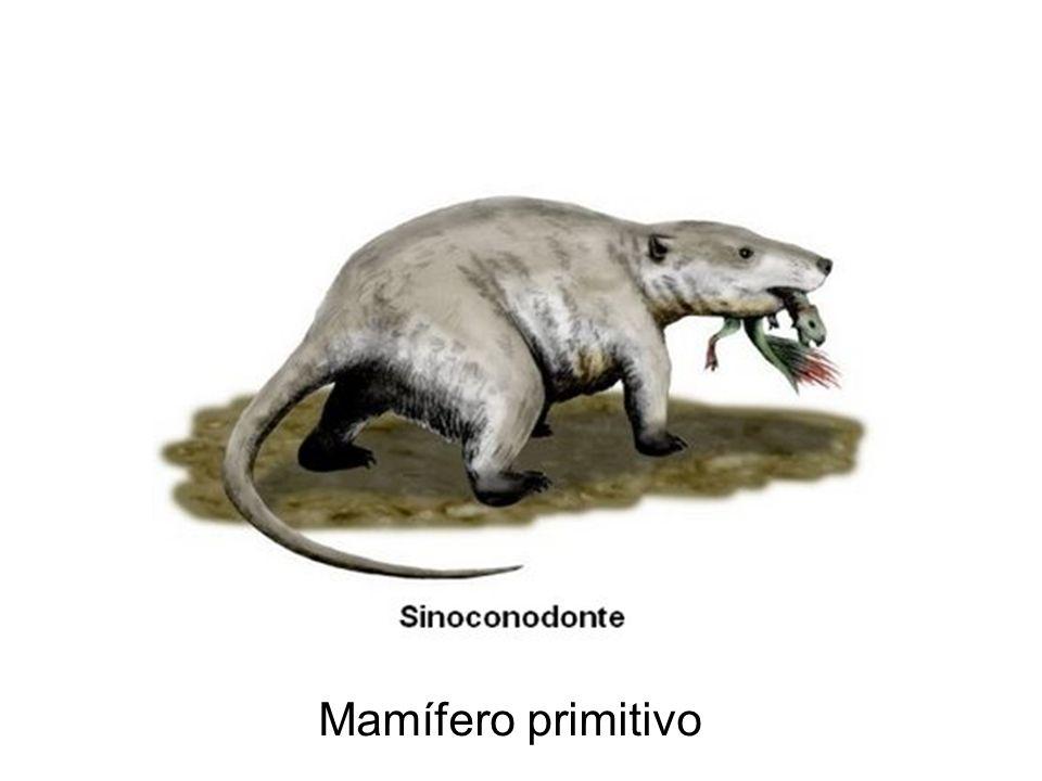 Mamífero primitivo