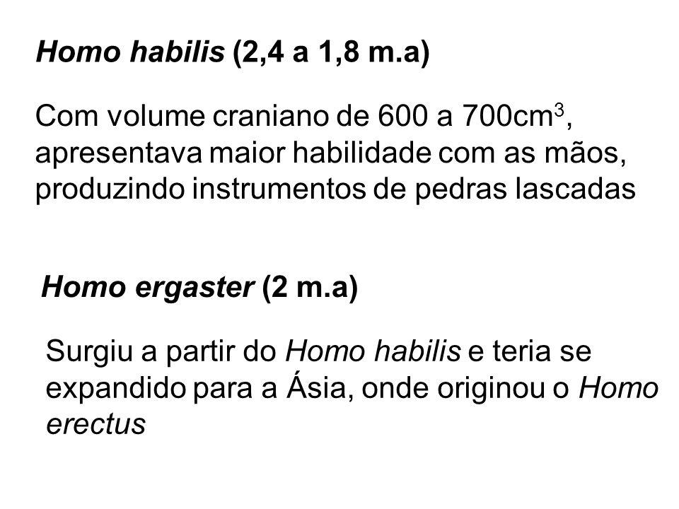 Homo habilis (2,4 a 1,8 m.a) Com volume craniano de 600 a 700cm3, apresentava maior habilidade com as mãos,