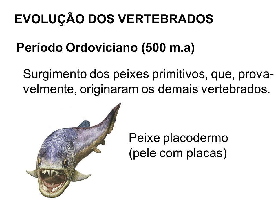 EVOLUÇÃO DOS VERTEBRADOS