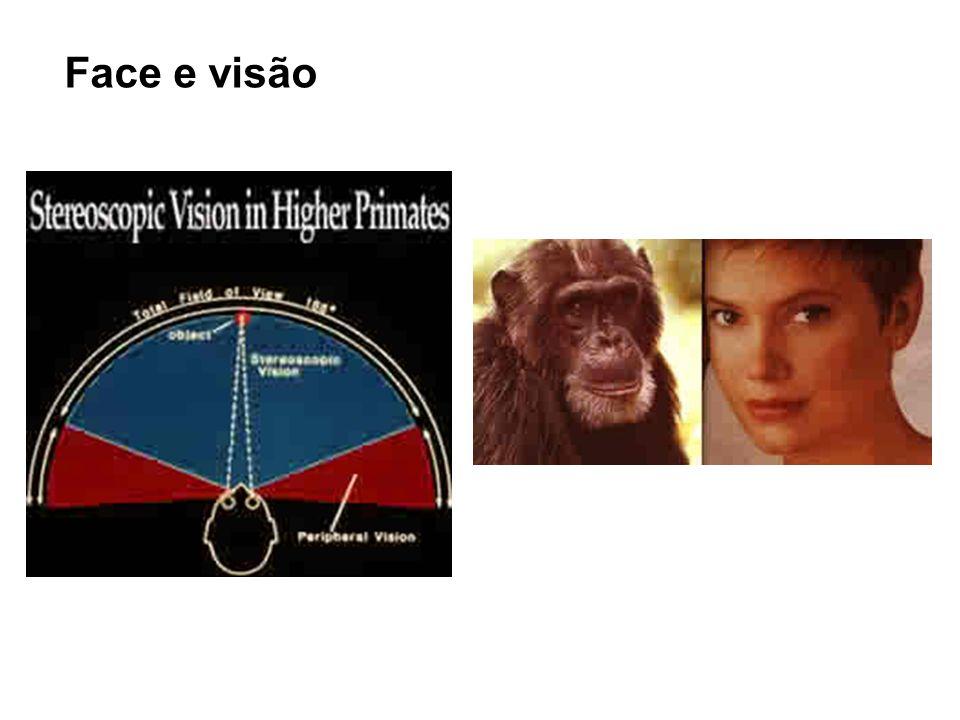 Face e visão