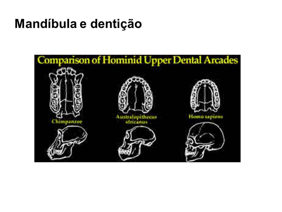Mandíbula e dentição