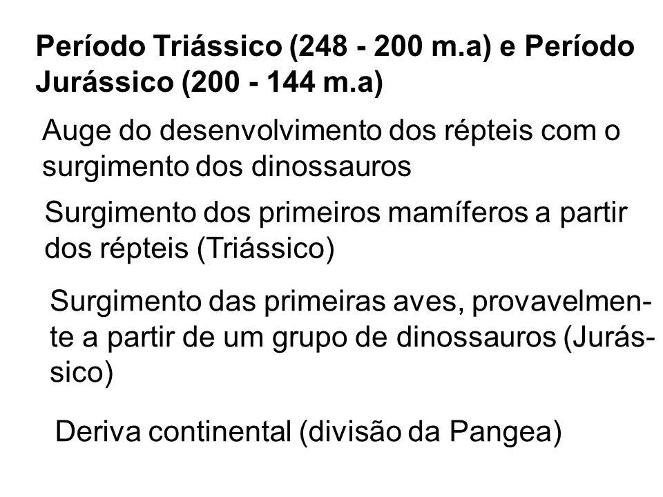 Período Triássico (248 - 200 m.a) e Período