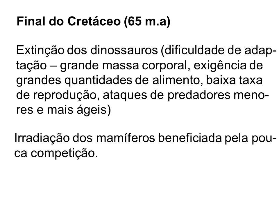 Final do Cretáceo (65 m.a) Extinção dos dinossauros (dificuldade de adap- tação – grande massa corporal, exigência de.