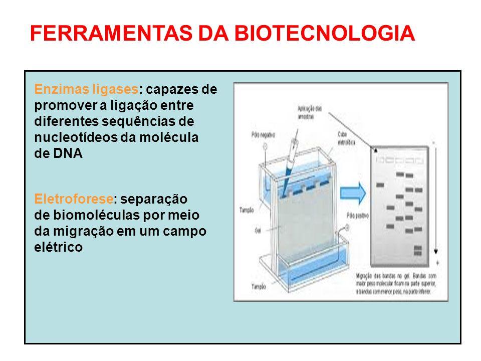 FERRAMENTAS DA BIOTECNOLOGIA