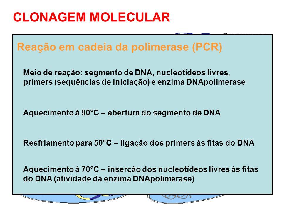 CLONAGEM MOLECULAR Reação em cadeia da polimerase (PCR)