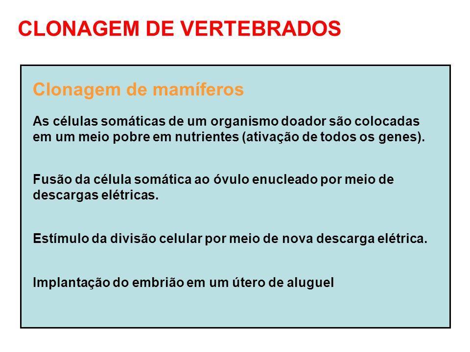 CLONAGEM DE VERTEBRADOS