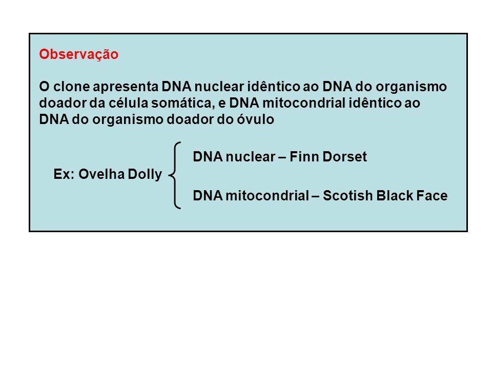 Observação O clone apresenta DNA nuclear idêntico ao DNA do organismo. doador da célula somática, e DNA mitocondrial idêntico ao.