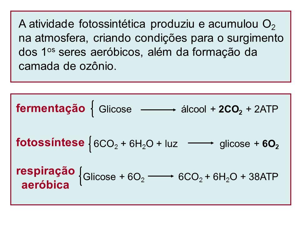 A atividade fotossintética produziu e acumulou O2