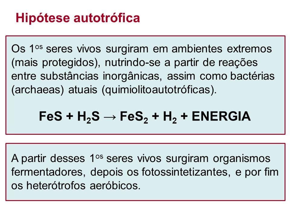 FeS + H2S → FeS2 + H2 + ENERGIA