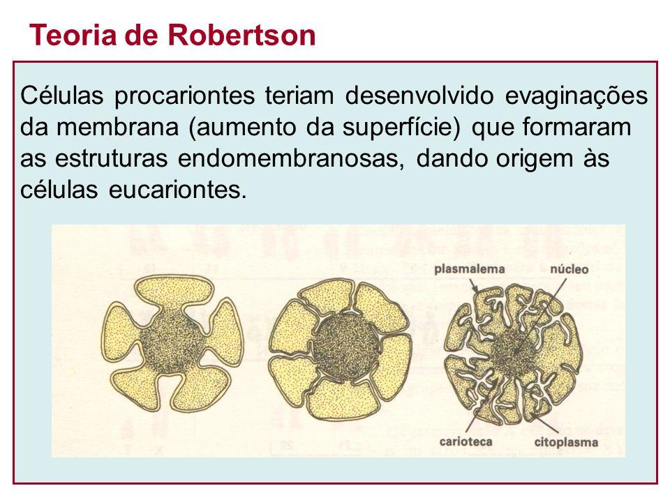 Teoria de Robertson Células procariontes teriam desenvolvido evaginações. da membrana (aumento da superfície) que formaram.