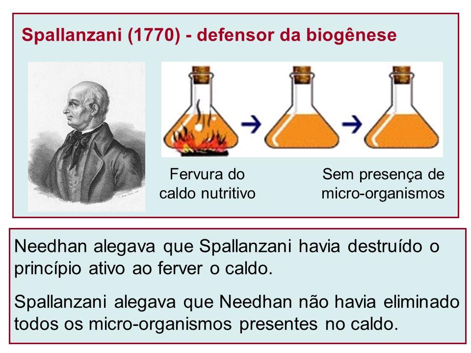 Spallanzani (1770) - defensor da biogênese