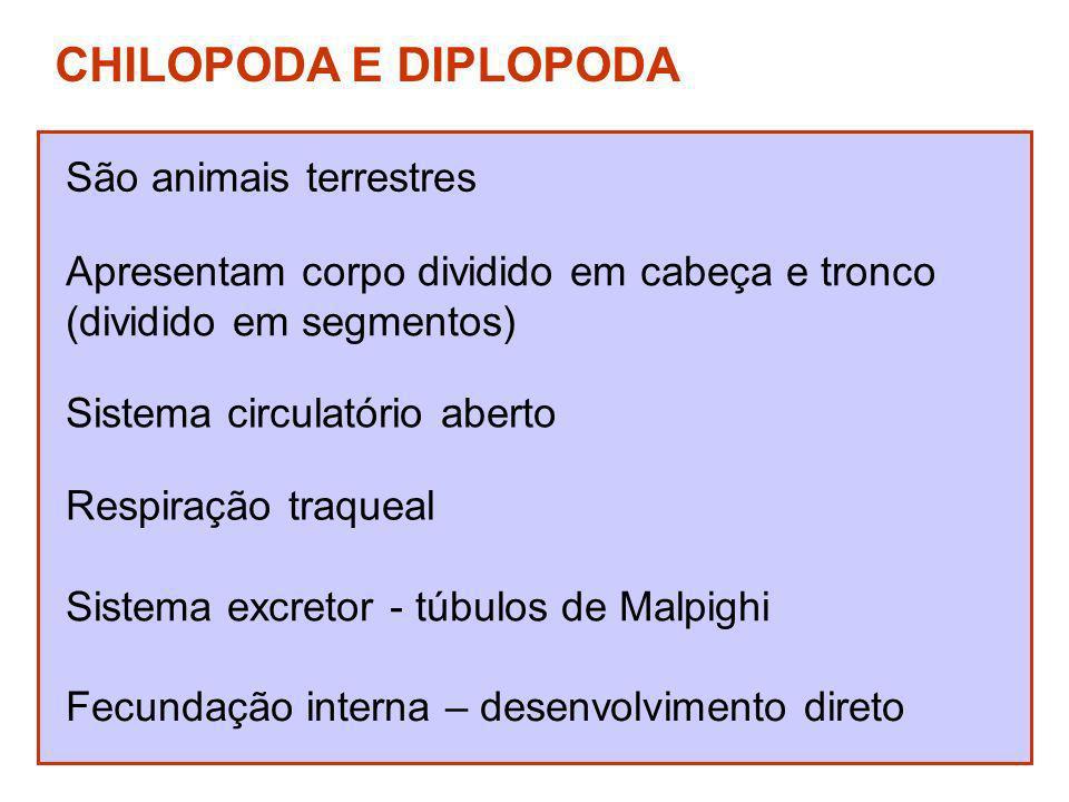 CHILOPODA E DIPLOPODA São animais terrestres
