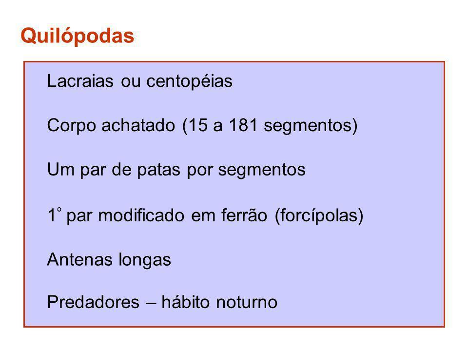 Quilópodas Lacraias ou centopéias Corpo achatado (15 a 181 segmentos)