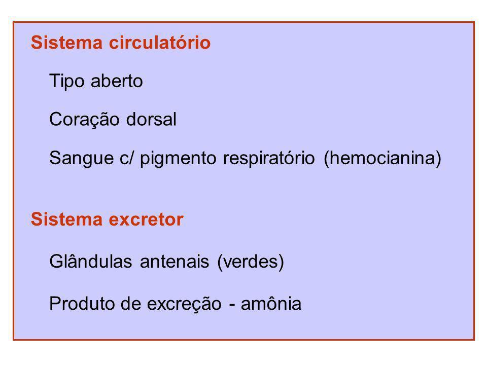 Sistema circulatório Tipo aberto. Coração dorsal. Sangue c/ pigmento respiratório (hemocianina) Sistema excretor.