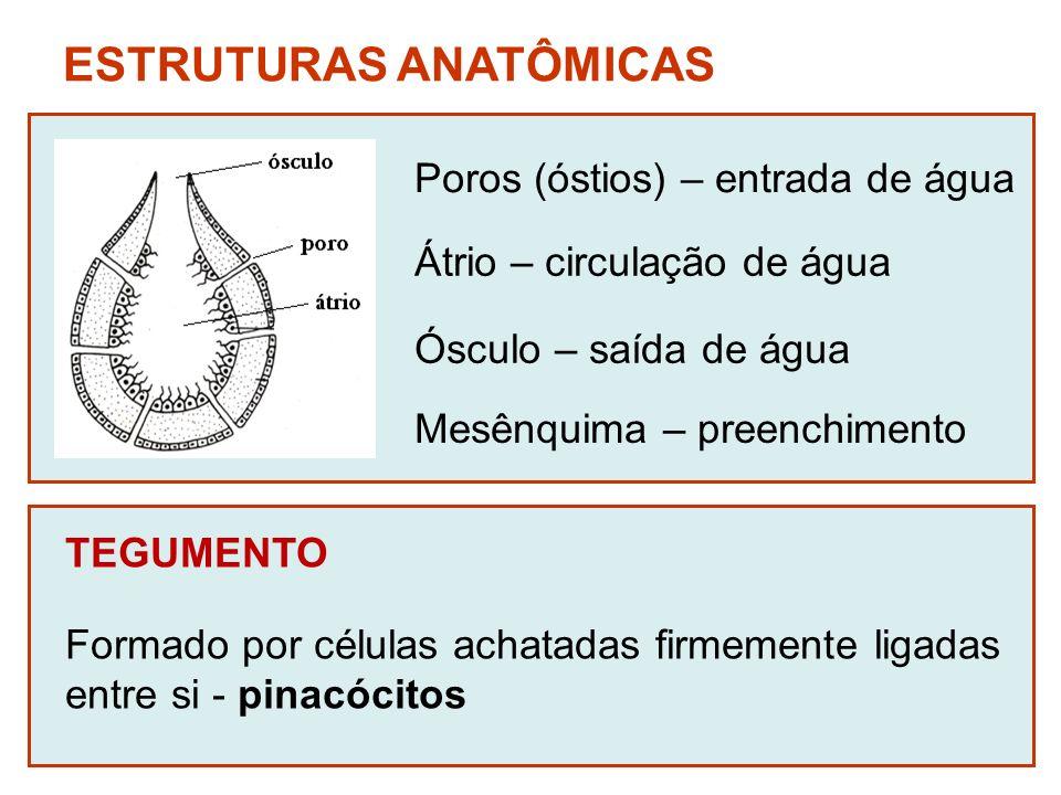 ESTRUTURAS ANATÔMICAS
