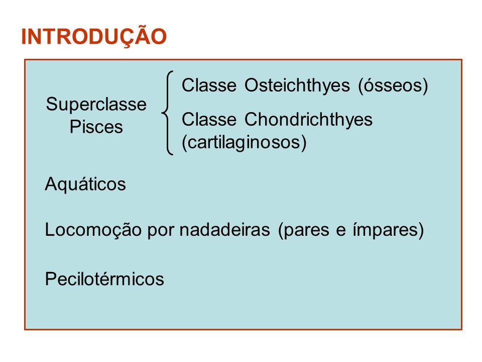 INTRODUÇÃO Classe Osteichthyes (ósseos) Superclasse Pisces