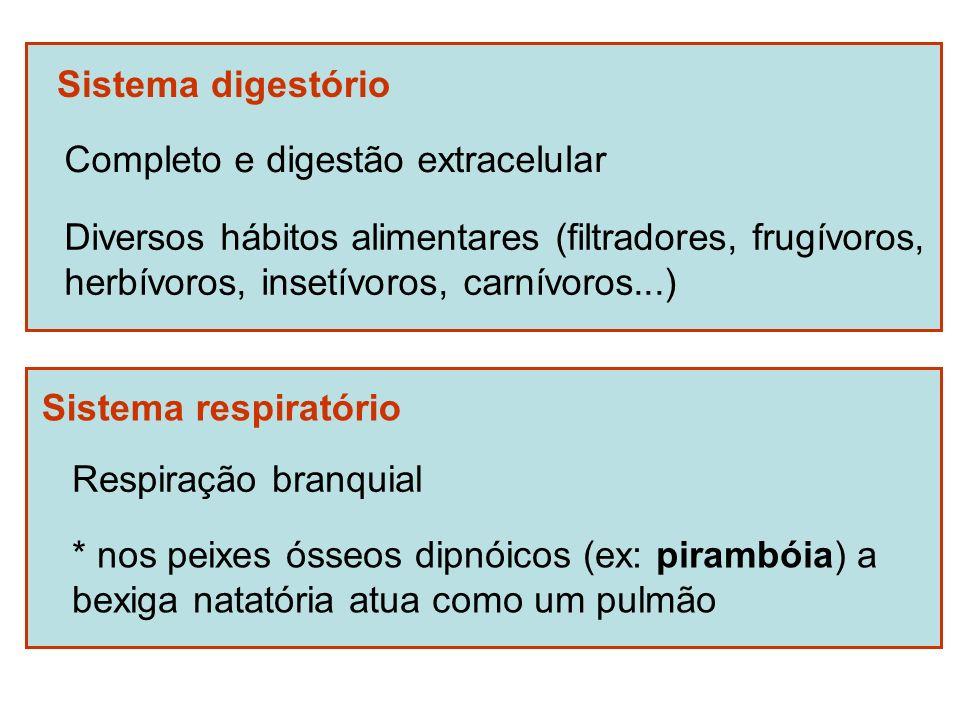 Sistema digestório Completo e digestão extracelular. Diversos hábitos alimentares (filtradores, frugívoros,